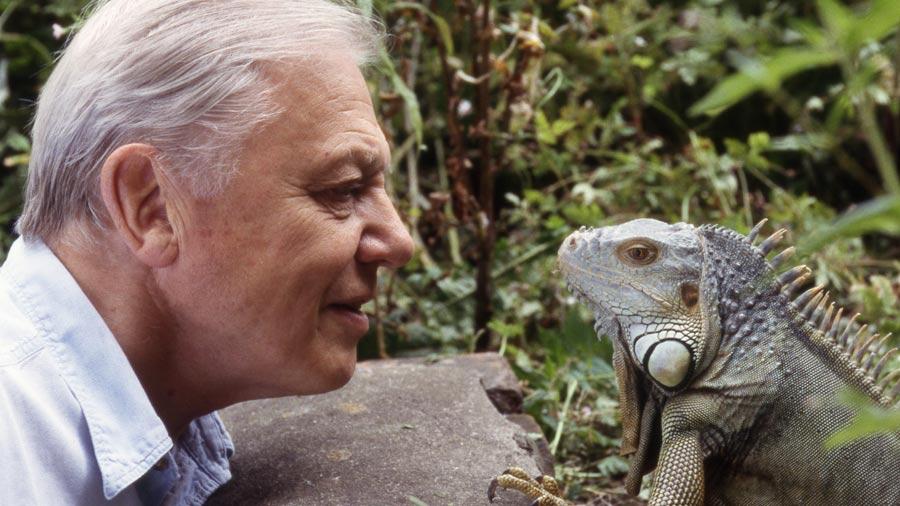 Sir-David-with-an-iguana-900x506