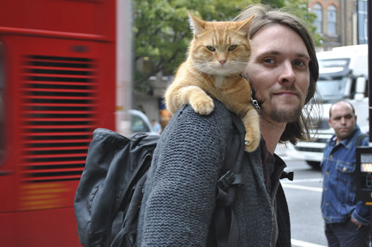 Rip Bob A K A A Streetcat Named Bob Passes Away At 14 Light A Candleforbob This Saturday Tellyspotting
