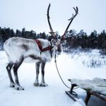 BBC4 goes slow with 'All Aboard: The Sleigh Ride'
