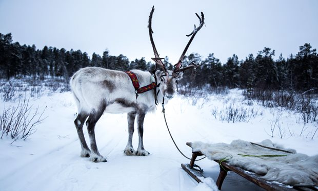 all_aboard__the_sleigh_ride__how_the_bbc_s_stunning_slow_tv_christmas_special_was_filmed