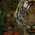 "Sir David Attenborough's ""Dynasties"" is nothing short of stunning"
