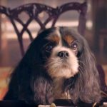 Behind the scenes with Tori, aka Dash the dog from 'Victoria'
