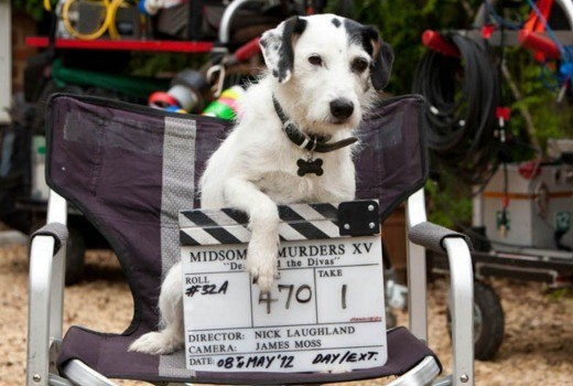 R.I.P. Sykes — DCI John Barnaby's loyal sidekick on 'Midsomer Murders' passes away at 16.