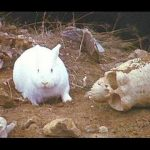 Celebrating National Bunny Day with a little help from 'Monty Python & the Holy Grail'