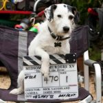 Remembering Midsomer Murders' Sykes and other 4-legged screen pets on International Dog Day 2021!